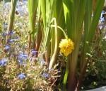 Gemüse im Gartenbeet